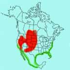American Avocet range