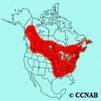 American Redstart range