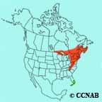 Black-throated Blue Warbler range