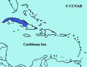 Cuban Vireo range