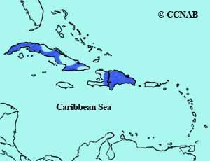 Greater Antillean Nightjar range