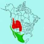 Long-billed Curlew range